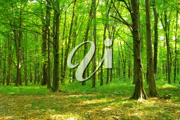 Royalty Free Photo of a Forest
