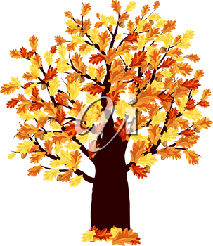 Autumn Oak Tree With Color Leaves on White Background. Elegant Design with Ideal Balanced Colors. Vector Illustration.