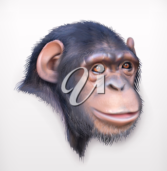 Chimpanzee head, realistic vector illustration